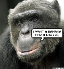 Monkey_law_2
