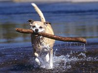Big_stick_buddy_1